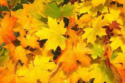 leaves-57427_1280